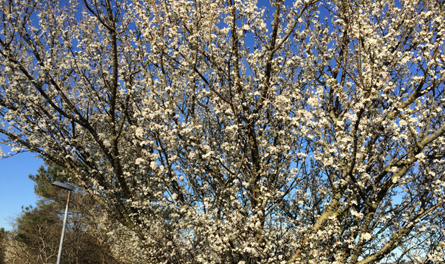 Forår2