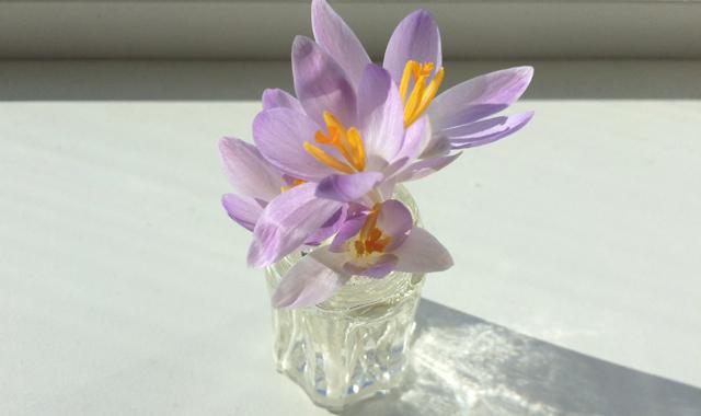 IMG_4596_blomst1